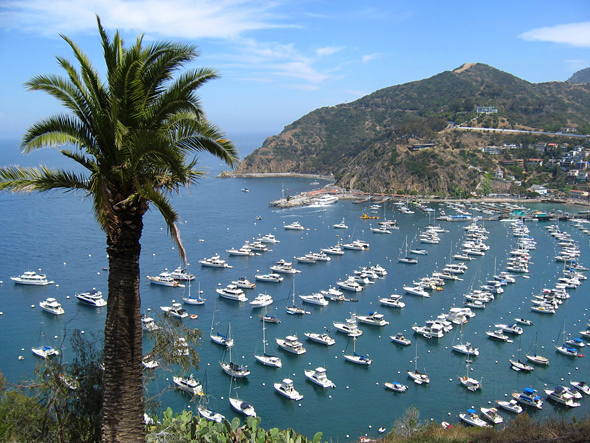 Island Hopping – Catalina Island, California