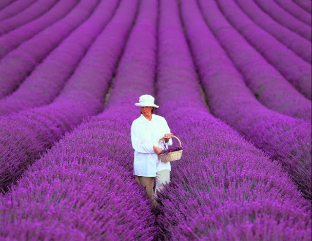 Another Oldie But Goodie…Lavender Fields of Provence