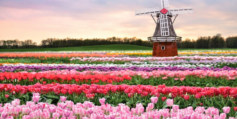 Wednesday Wanderlust ~ The Netherlands