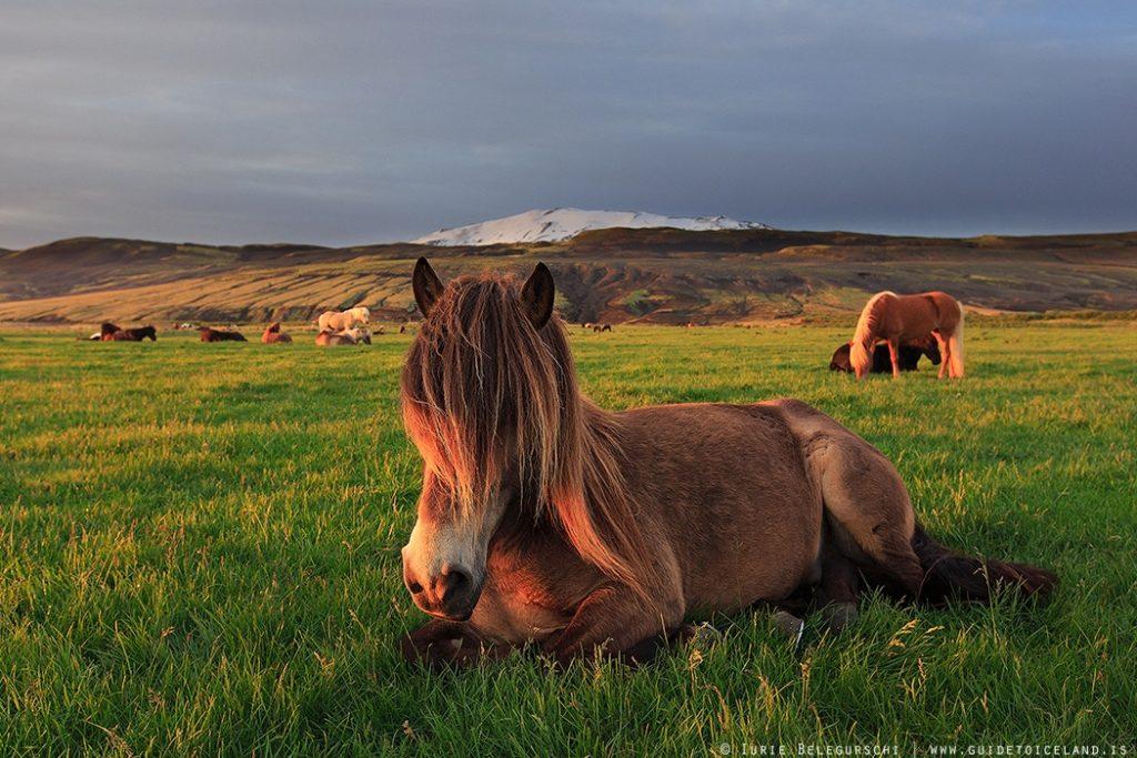 horse-riding-and-golden-circle-tour-0