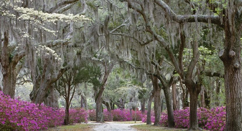 Savannah-Georgia-5-830x450