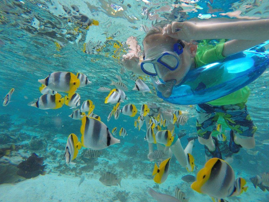 snorkel-fish-second16-traveler-1024x768